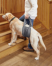 Assist your older dog with a comfortable lift harness that supports her rear legs and hips.