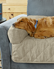 It's a dog bed, it's a furniture cover—our Grip-Tight Bolstered Sofa Protector multi tasks.