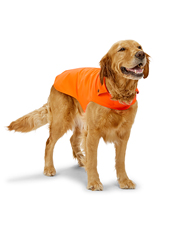 Our Softshell Dog Jacket blocks briars and offers rugged, breathable protection in the field.