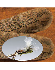 Indispensable feathers for tying wing feathered Muddler Minnows or Hopper flies. Made in USA.