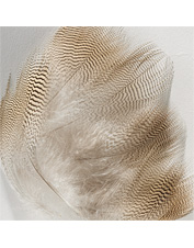 The finest quality fly-tying wood duck feathers for realistic imitations.