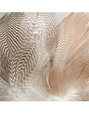 Bring your patterns to a new level with our fly-tying feathers. Made in USA.