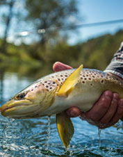 Orvis-Endorsed Fly-Fishing Outfitter in Piney Flats, TN