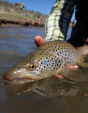 Orvis-Endorsed Fly-Fishing Guide in Truckee, California