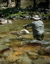 Orvis-Endorsed Fly-Fishing Outfitter in Bass Lake, California