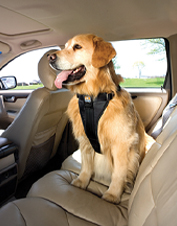 This Tru-Fit dog safety harness works as a car restraint system or as a conventional harness.